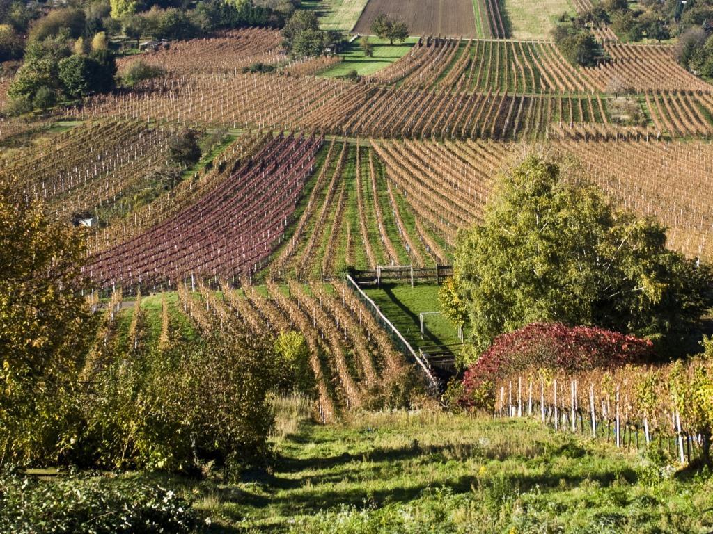 Chinesische Unternehmen und Privatpersonen kaufen immer noch Weingüter in Europa auf - copyright: pixabay.com
