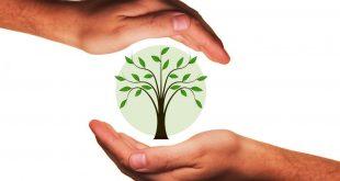 Bio-Trend hält an: Die Branche boomt, denn nachhaltiger Konsum liegt im Trend! - copyright: pixabay.com
