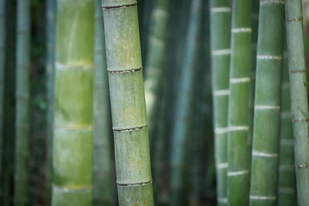 Werbegeschenke aus Jute, Bambus und Papier copyright: pixabay.com